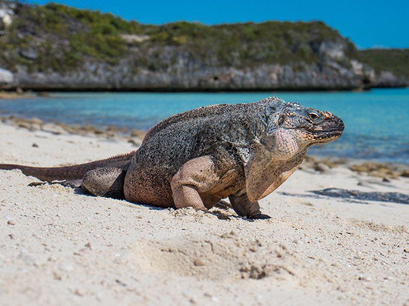 Látnivalók az Exuma-szigeteken